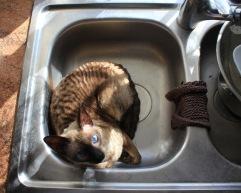 Freya in the sunny sink, 2011