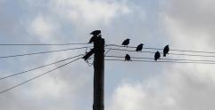 Birds at dusk