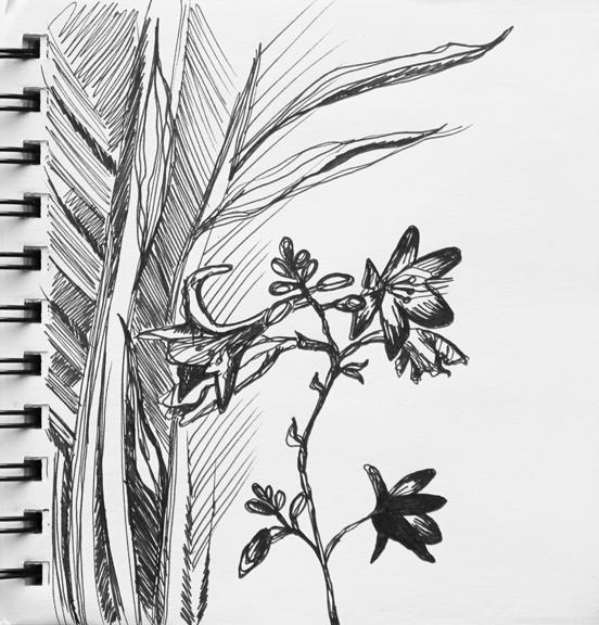 sketch no. 66