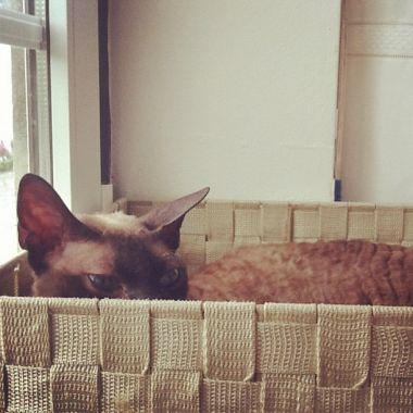 Freya, she's a cat in a box, 2012