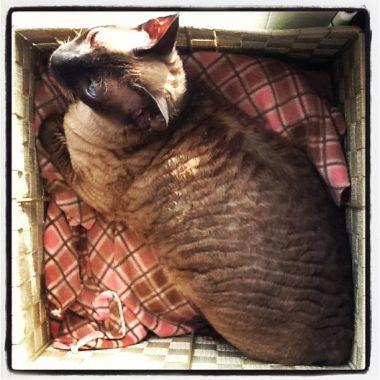 Freya in her napping box, 2012