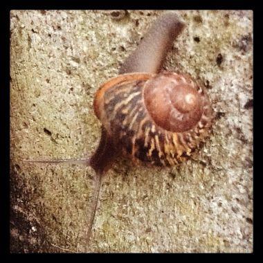 snail, 2012