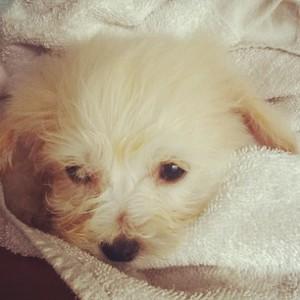 Baby puppy, Azora, 2012