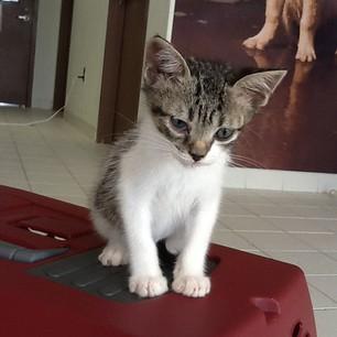 kitten, 2012
