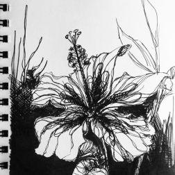 sketch no. 248