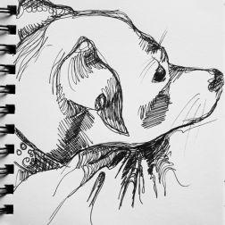 sketch no. 331