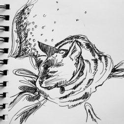 sketch no. 336