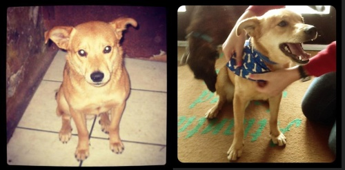 Before/After: Ponyo (Adopted)