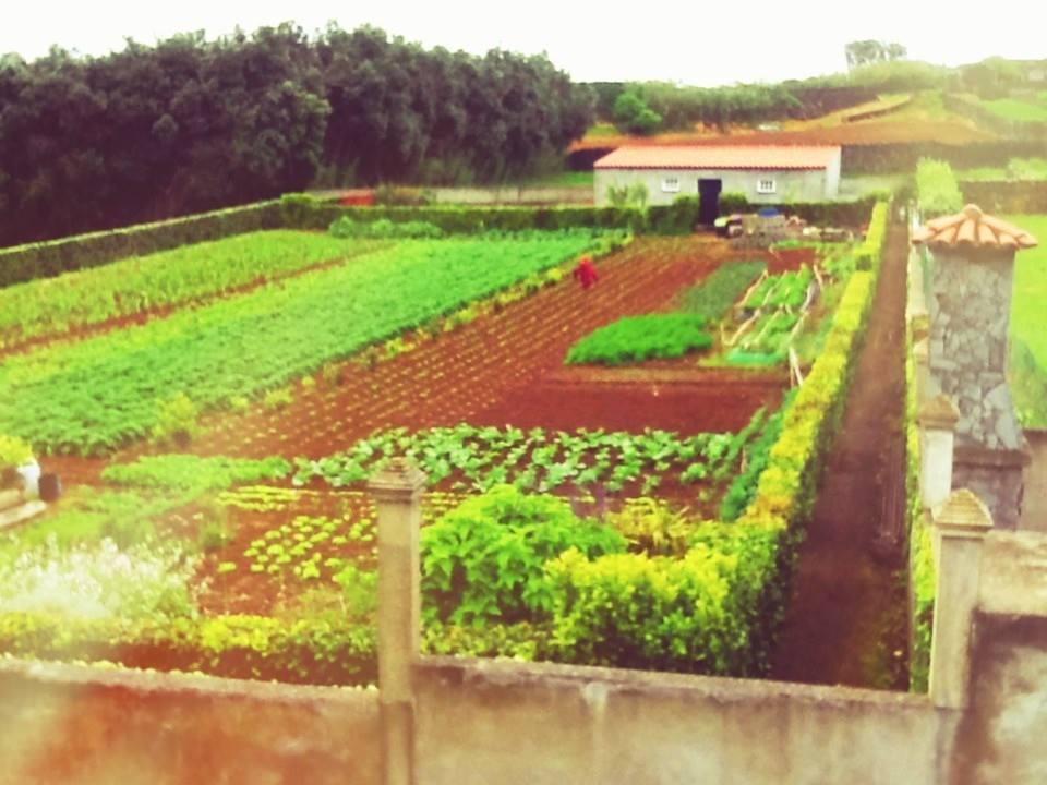 My neighbor's garden.