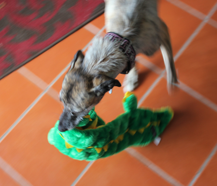 Soup with new squeaky alligator.