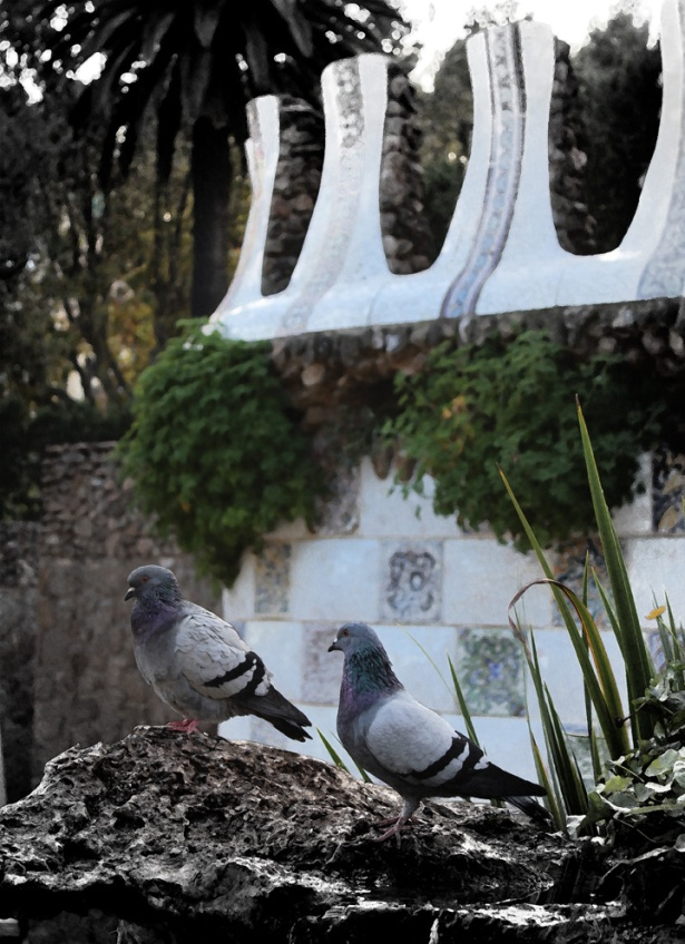 Pigeons in Park Güell, Barcelona 2013