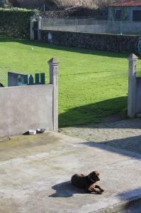 Lulu in the yard, enjoying the sunshine.
