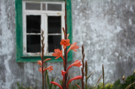 Flower in front of an abandoned building at the end of our street.