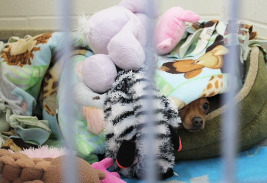 Where is Chi Chi?   Happily cuddling under all his toys.